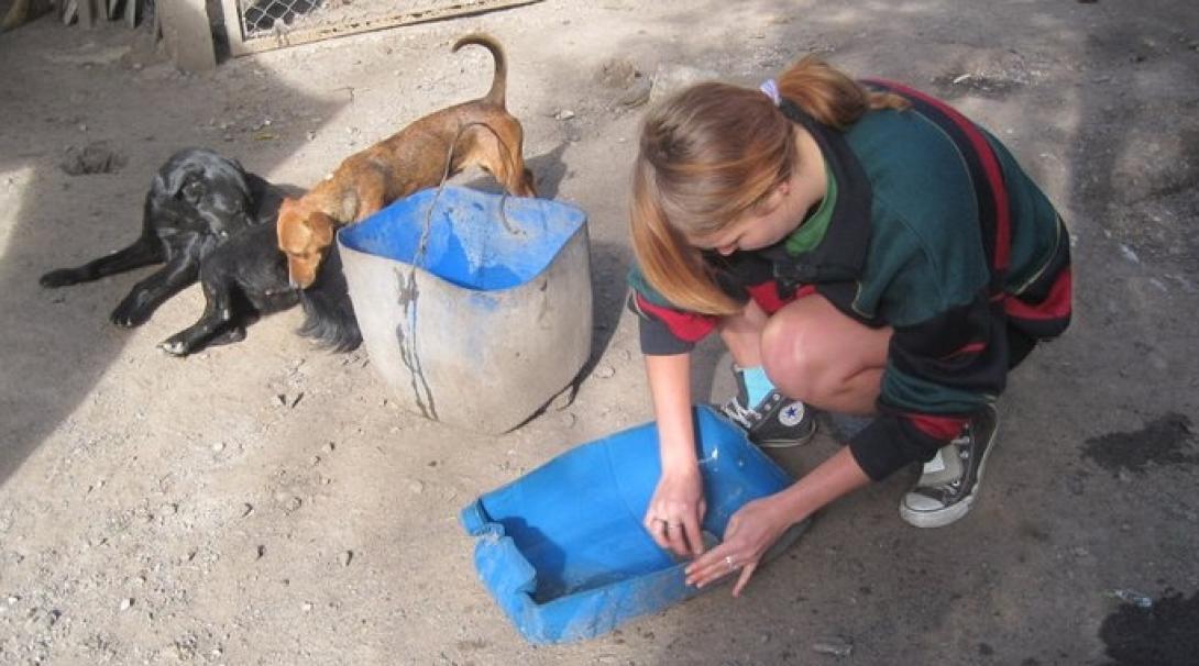 Durante su voluntariado con animales en Argentina, una voluntaria cambia el agua para los perros.